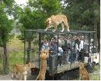 south india wildlife tours packages
